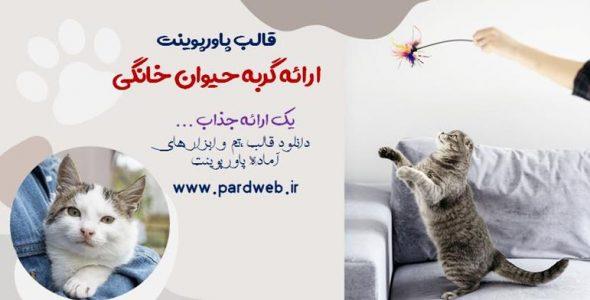 قالب پاورپوینت گربه حیوان خانگی